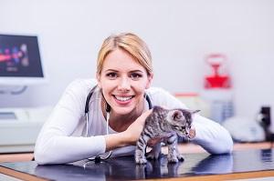 Katze in medizinischer Obhut